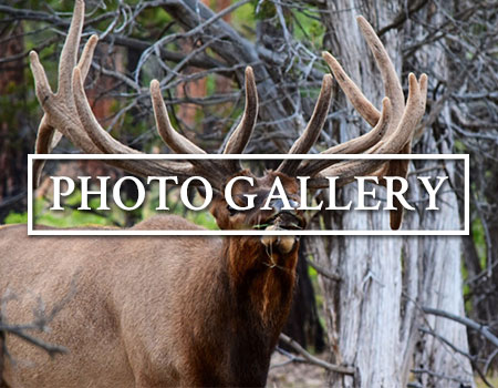 Shadow Valley Outfitters Photo Galleries
